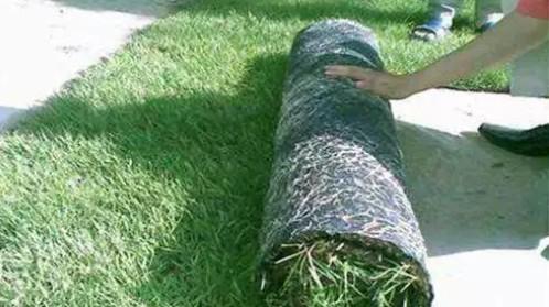 无纺布在农业上的应用